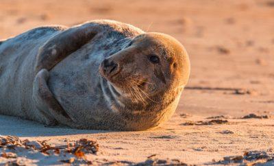 Observer les phoques de la Baie de Somme